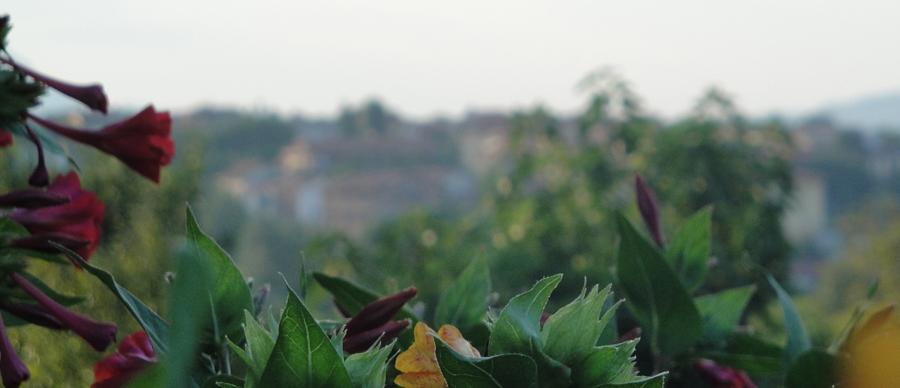 Masserie del Nonno | I Colori della Natura 3